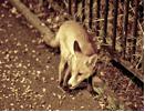 0308_fox.png