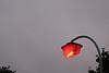 0209_lamppost.jpg