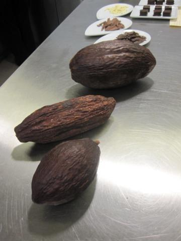The three kinds of cocoa bean.  From front to back: Criollo, Forastero and Trinitario.