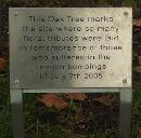 oaktree_111010.jpg