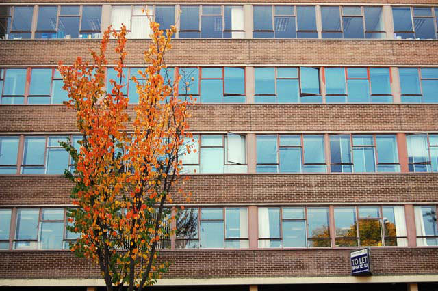 Tree and Offices - 'Autumn' taken in Penge, SE20, October 2008 Christina Owen