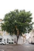 Nature-ist Newsflash: Elm Trees to Make a Comeback
