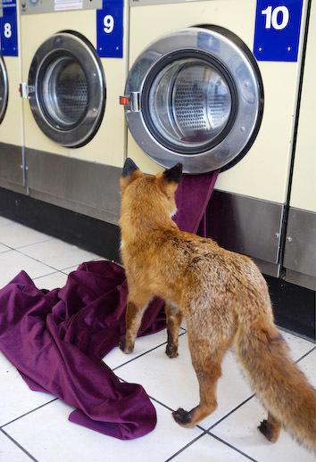 The foxiest laundrette scene since that Levi's ad.