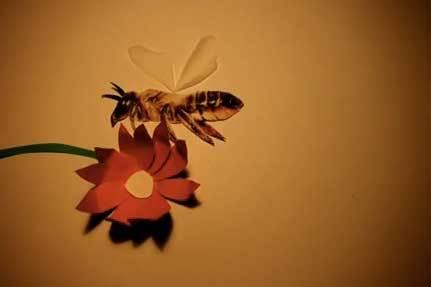 Sponsor A Bee @ Roots & Shoots