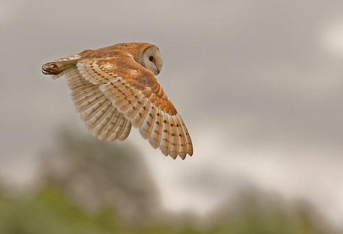 Nature-ist Owl Alert