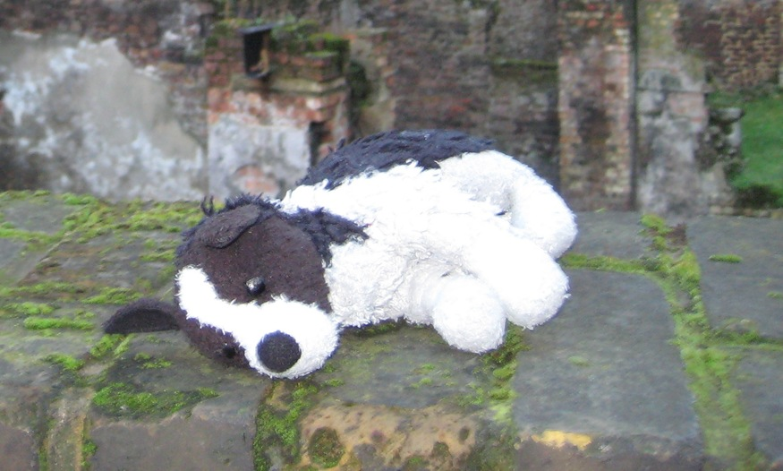 abandoned-doggie-sleeps-closeup.jpg