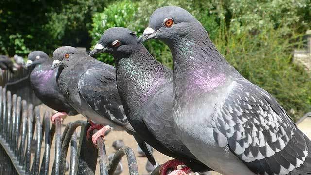 RSPB Big Garden Birdwatch This Weekend