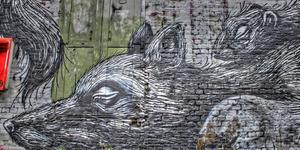 Street Artist Roa Back In London