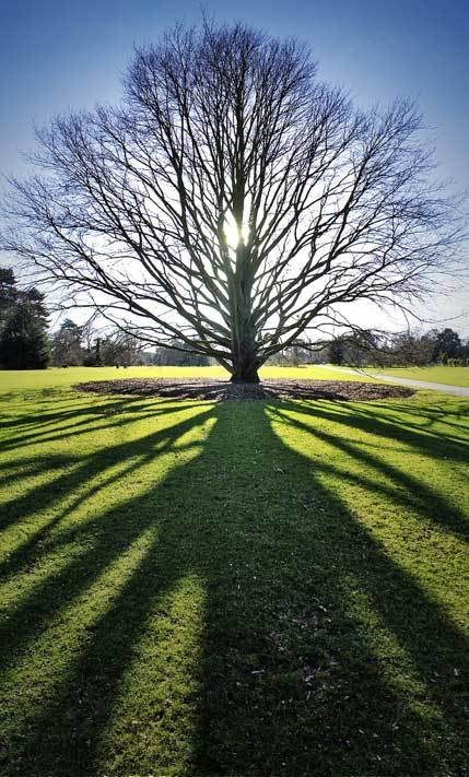 Photo of the day kew gardens londonist for Garden trees london