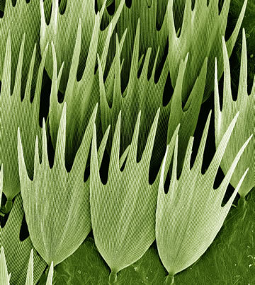 You'd never guess, but this is a close up of a moth's wing, captured by Kevin Mackenzie.