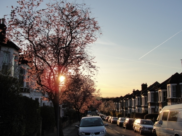 Blossom trees lining Mount Pleasant, in Lewisham / Rachel H