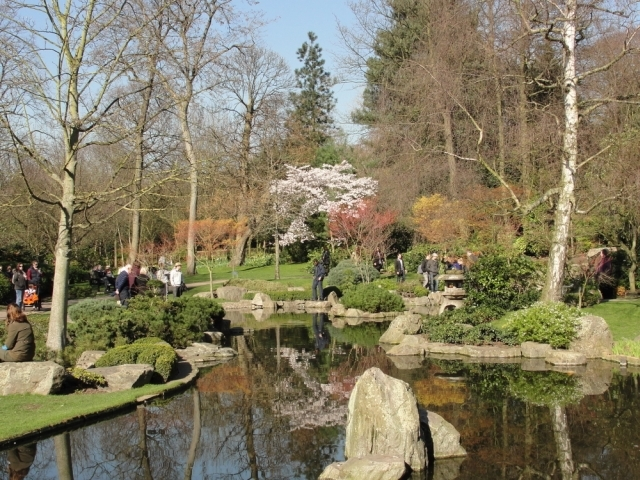 A cherry blossom tree centre stage in the Kyoto Garden, Holland Park / Rachel H