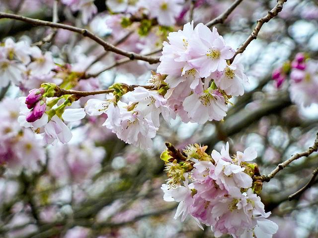 Sunday Seasoning Special: London Blossom