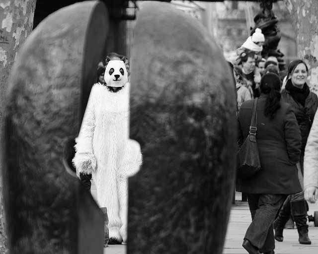 Photo of the Day: Disturbing Panda