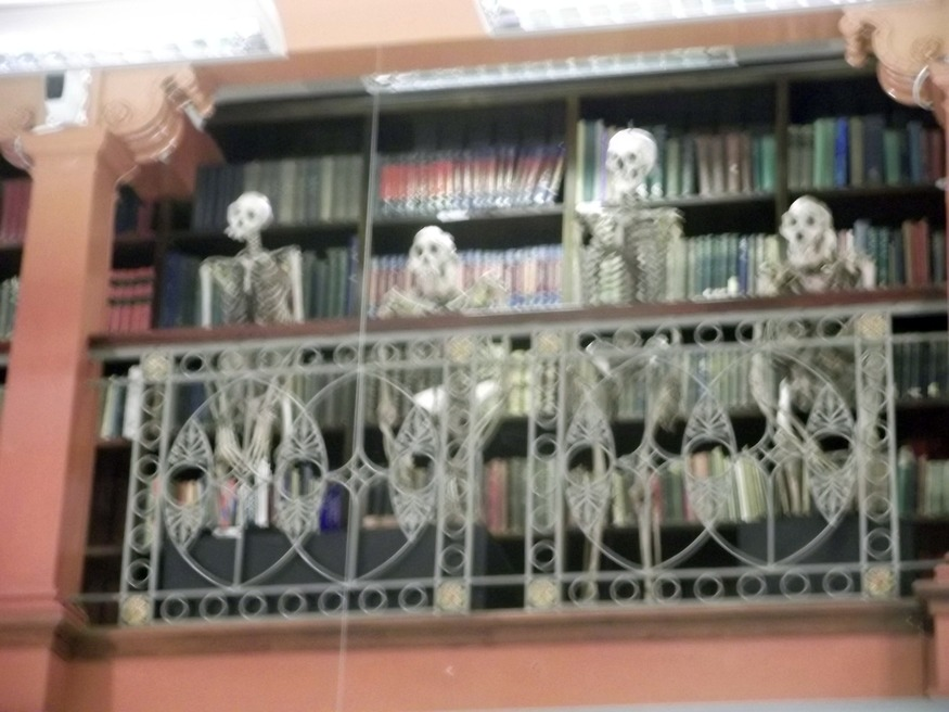 Skeletons in the library. Sorry about the blur.