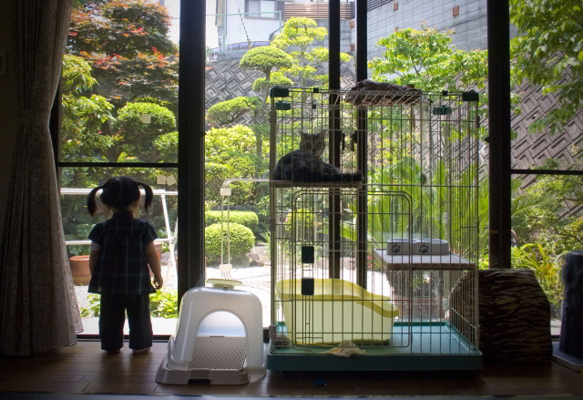 View from a living room onto a domestic garden in Nara, Japan (c) Susan Andrews