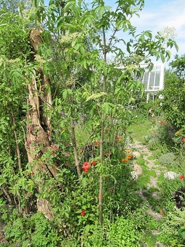 The wilderness of the 'SKYshades Garden'