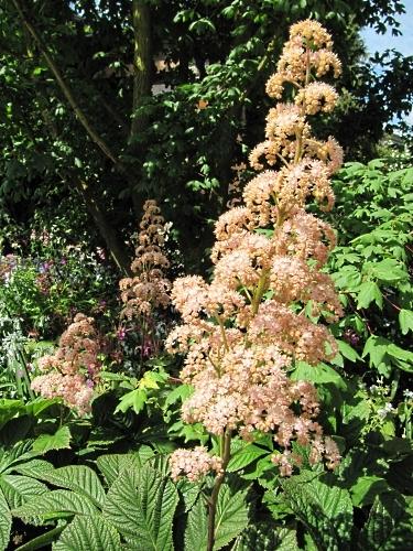 Handsome plant in the HESCO Garden