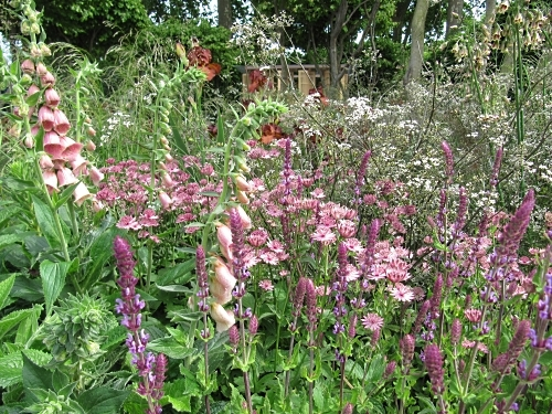 Foxgloves featured in many gardens, including Laurent Perrier's