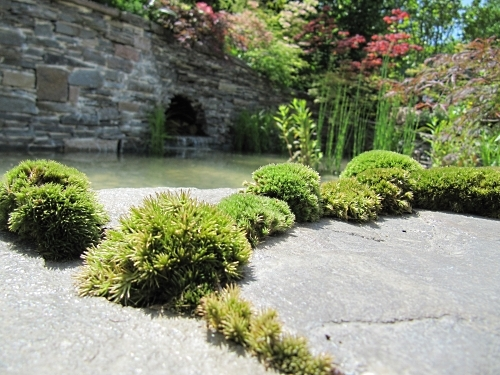Wonderful pillows of moss in the 'A Beautiful Paradise' Garden