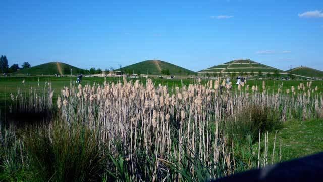 Nature-ist: Northala Fields