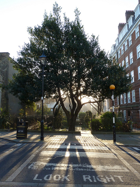 Sunlight through a tree on the Lloyd Baker estate (which, with the crossing's lettering, could be a Conservative Party advertisement)