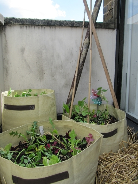 Planted planters