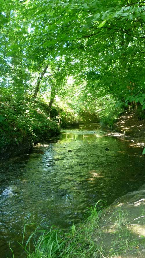 The brook under a green canopy