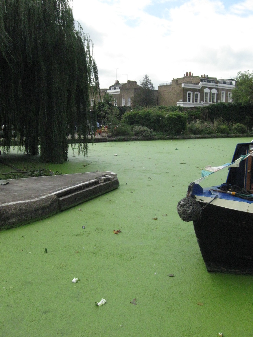 London's Canals Battle Weed Infestation