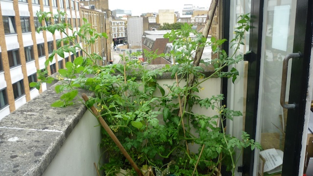 Six Weeks On: How's That Londonist Garden Growing?