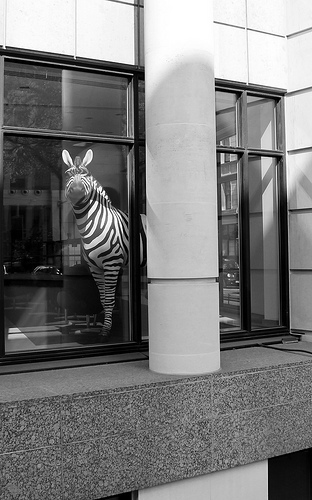 Office zebra by blogan1981
