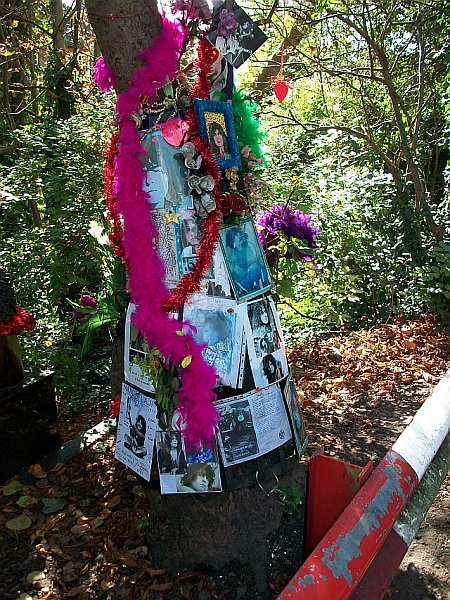 The Bolan Tree on Queen's Ride / photo by Ian Mole
