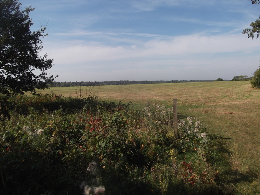 The vast and ancient plains of Riddlesdown.