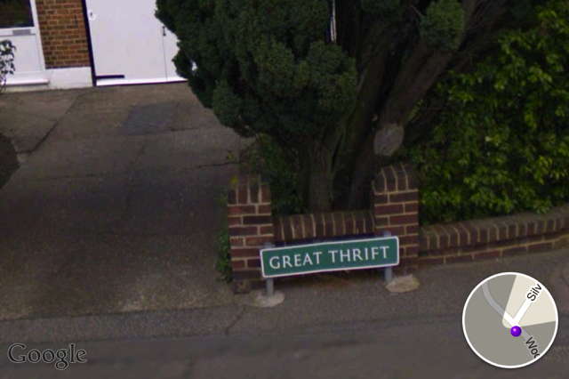 Great Thrift in Petts Wood.