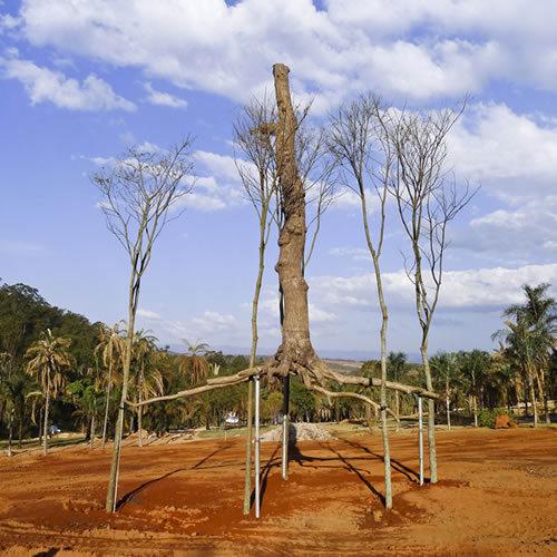 Giuseppe Penone, Elevazione bronze 5 guarita trees photo © Archivio Penone
