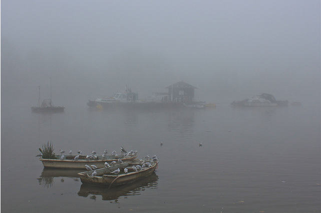 Severe Weather Warning: Fog Over London