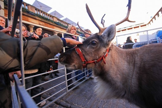 Go Reindeer Petting In Covent Garden