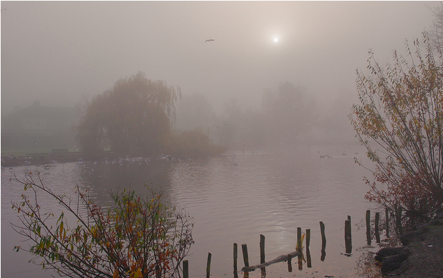 Waddon Ponds, Croydon by leica0000