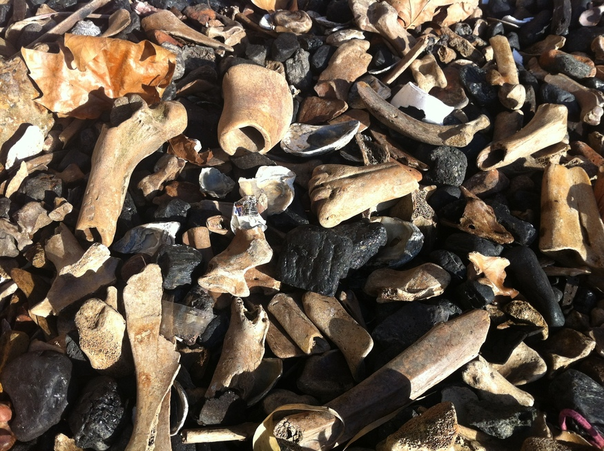 Hundreds Of Bones Along The Banks Of The Thames