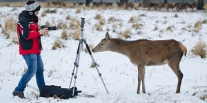 Deer Versus Photographer In Richmond Park