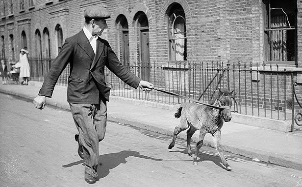 My Pet Foal: 21 May 1936: Mr Ogles of Poplar, east London, exercising his 9 week old pet foal called Ogles (Photo by William Vanderson/Fox Photos/Getty Images)