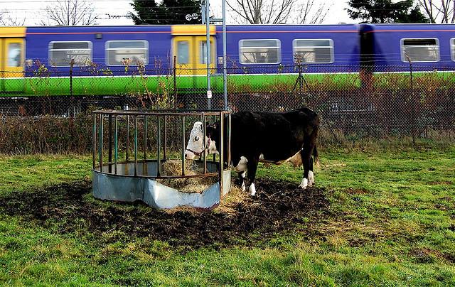 Kentish Town City Farm Celebrates 40 Years