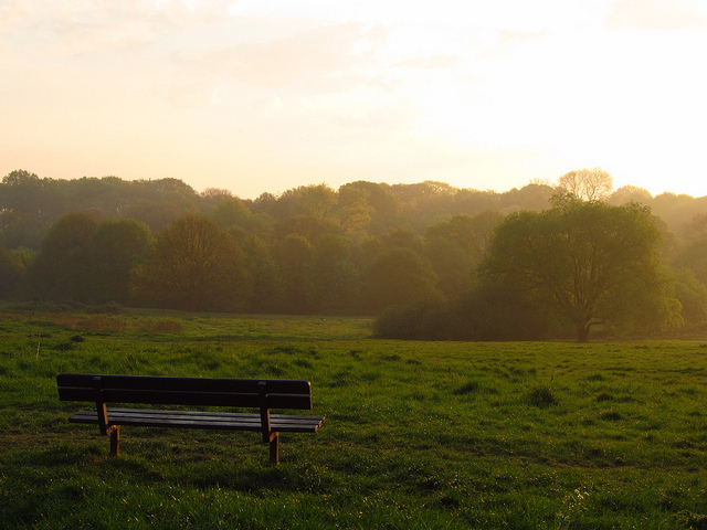 Hampsted Heath nice and early, by Laura Nolte