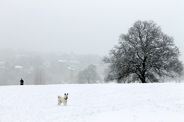 london_snow_hampstead_heath.jpg