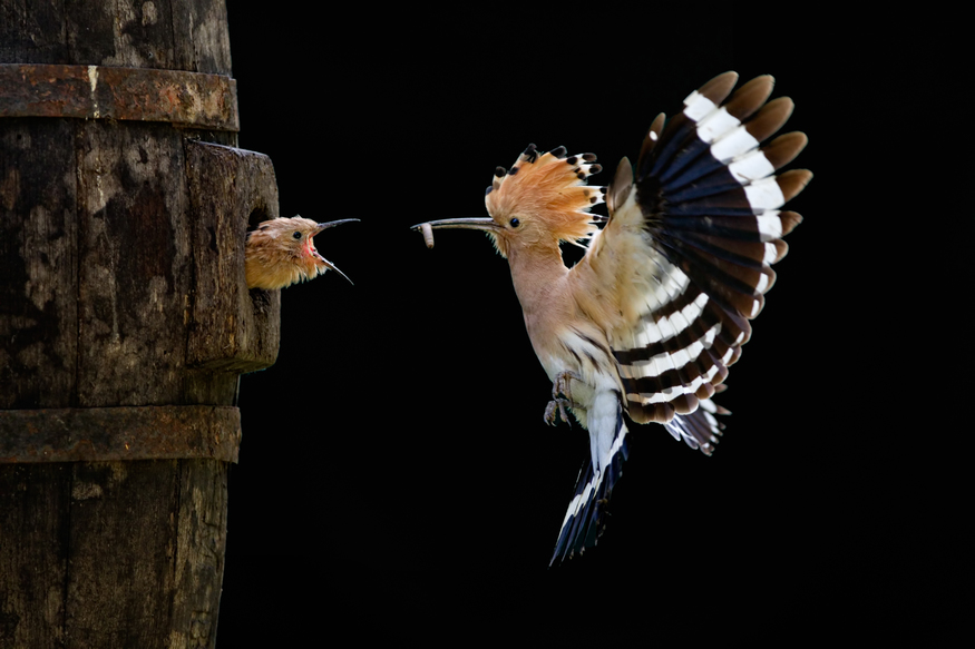 Giovanni Frescura, Italy, Nature & Wildlife, Sony World Photography Awards 2012