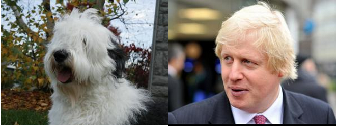 The Mayoral Election In Dogs