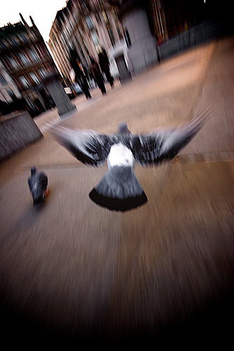 The London Pigeon Simulator