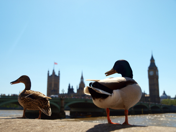 Things To Do In London This Jubilee Weekend: 1-5 June