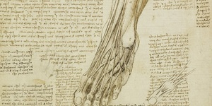 Preview: Da Vinci Anatomical Walks