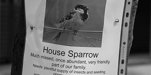Take Part In The Cockney Sparrow Survey